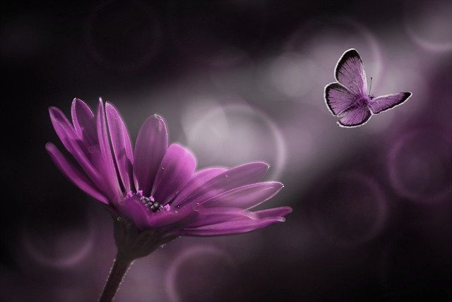 A purple butterfly, the symbol of lupus, flying away from a purple flower